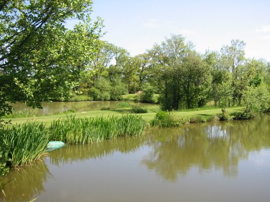 Springtime on Derwen pool - 1 of 3 Trout Lakes